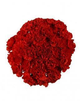 Bouquet of 51 red dianthus | Red flowers to colleague flowers