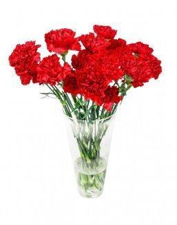 Bouquet of 15 red dianthus | Red flowers to colleague flowers
