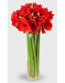 Bouquet of 15 red amariliss | Delivery and order flowers in Karaganda