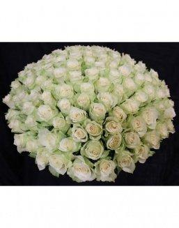 Bouquet of 101 white holland roses | 101 roses,lilies expensive